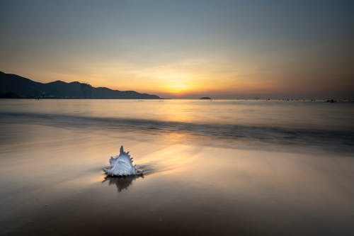 White Shell on Seashore During Sunset