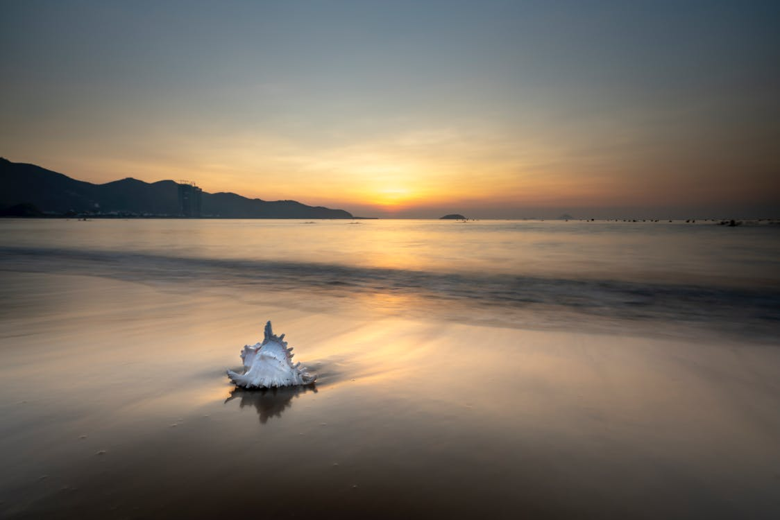 White Shell on Seashore During Sunset