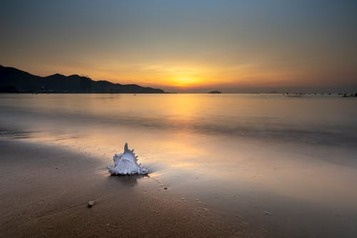 White Seashell on Seashore During Sunset