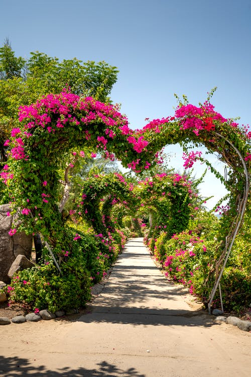 Garden With Heart Shaped Arches On Pathway
