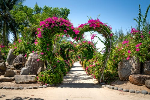 Garden Landscape With Heart Shaped Arches