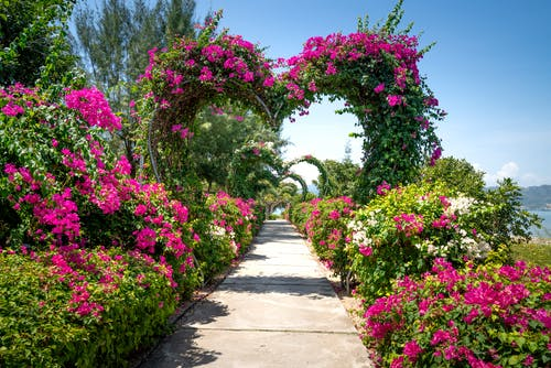 Heart Archway with Pink Flowers
