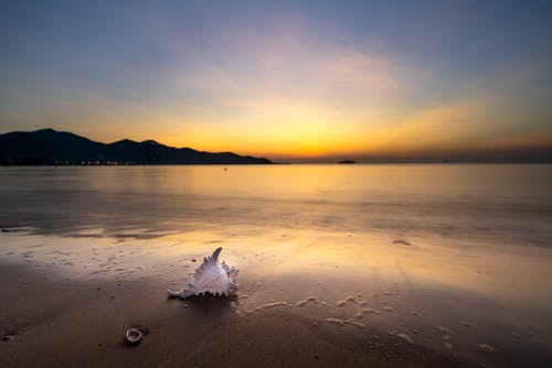 White Seashell On Sand During Sunset