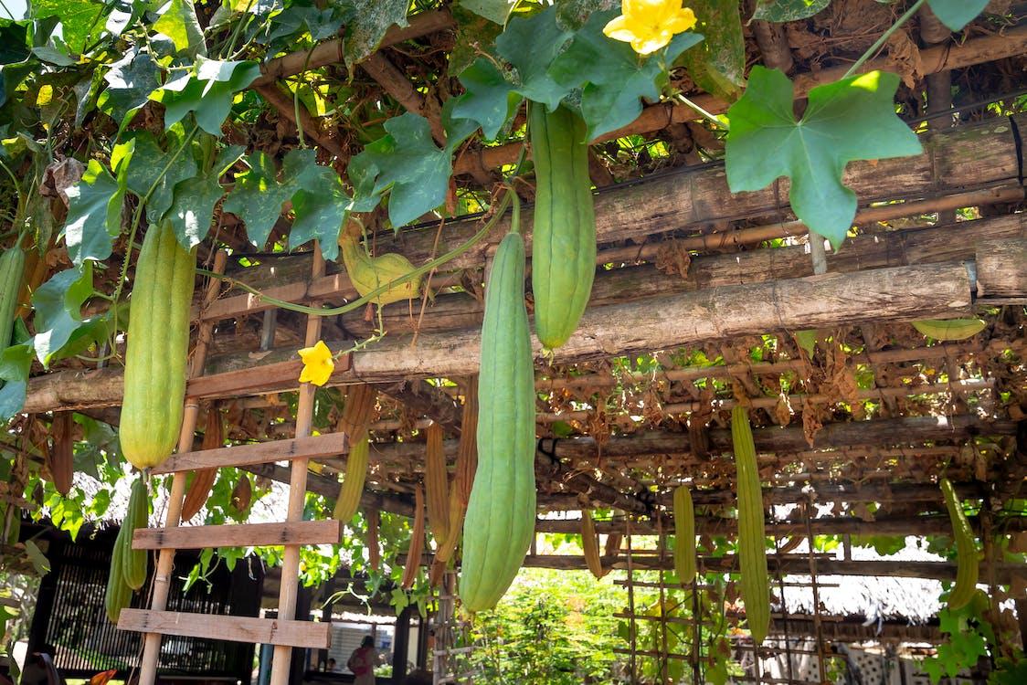 Fotos de stock gratuitas de agricultura, al aire libre, bambú