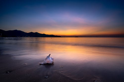 White Seashell on Beach during Sunset