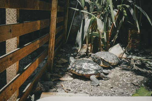 Безкоштовне стокове фото на тему «ґрунт, Денне світло, Деревина, дика природа»