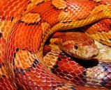 reptile, wildlife, close-up