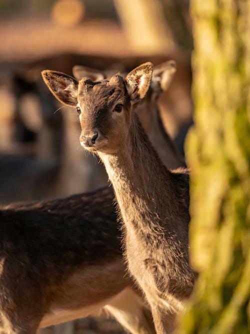 Brown Deer Standing on Green Grass