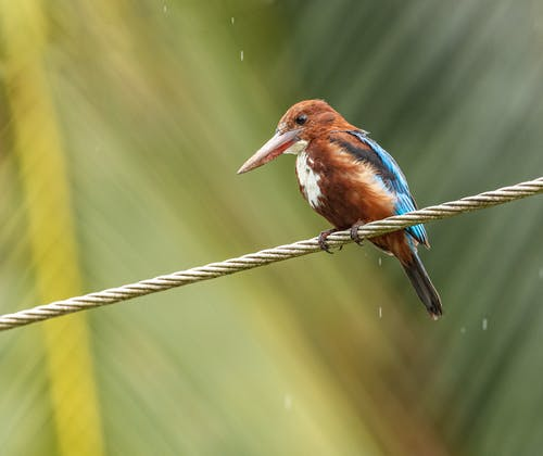 Blue and Brown Bird on Rope