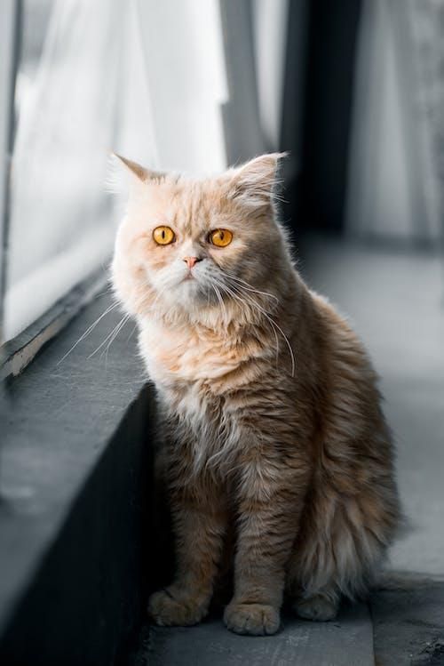 Orange Cat on the Floor