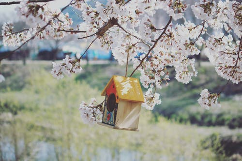Wooden birdhouse with yellow roof hanging on branch of blooming tree growing in meadow on sunny spring day