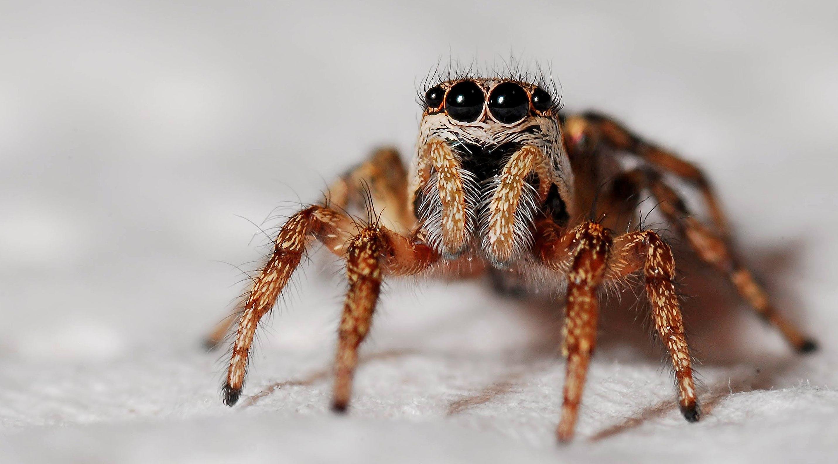 Ingyenes stockfotó makró, pók, rovar témában