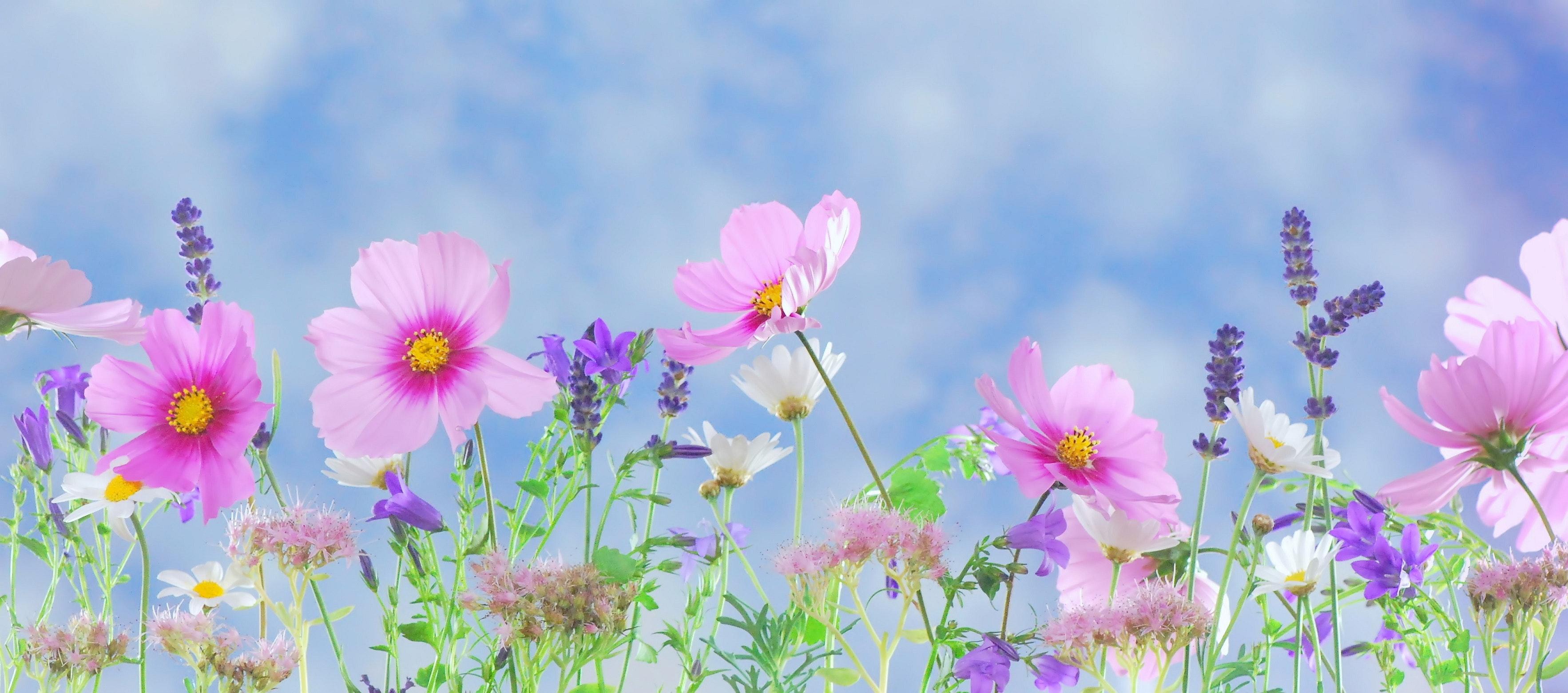 Superb Pink Petaled Flower During Daytime