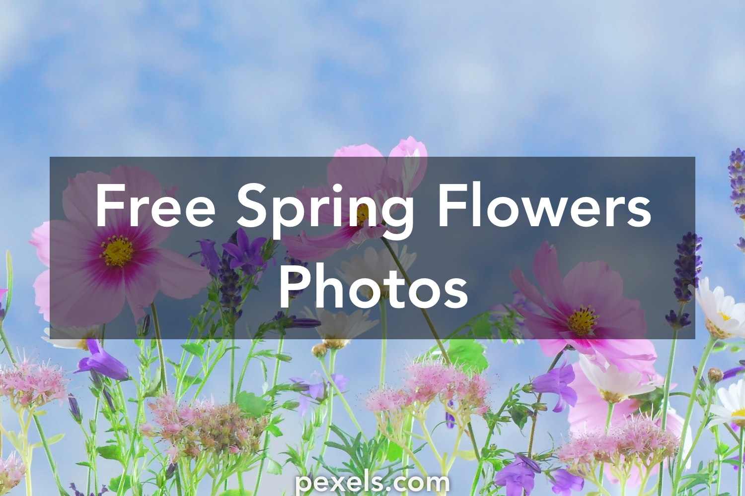 1000 beautiful spring flowers photos pexels free stock photos mightylinksfo