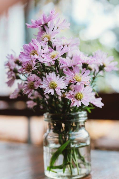 Kostenloses Stock Foto zu aromatherapie, blühen, blumen