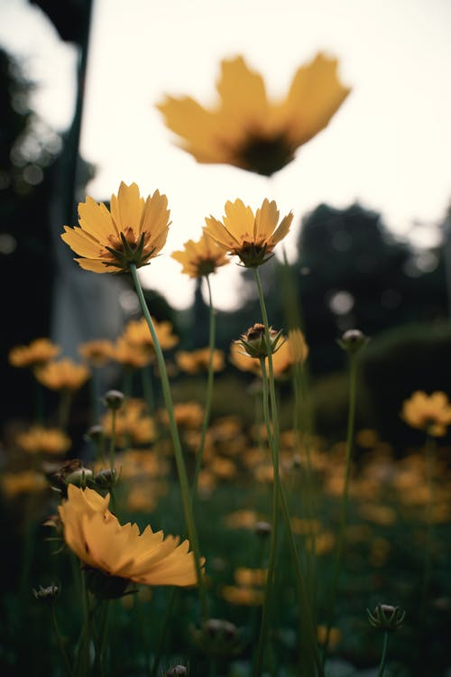 Free stock photo of beautiful flowers, green, nature, naturephotography