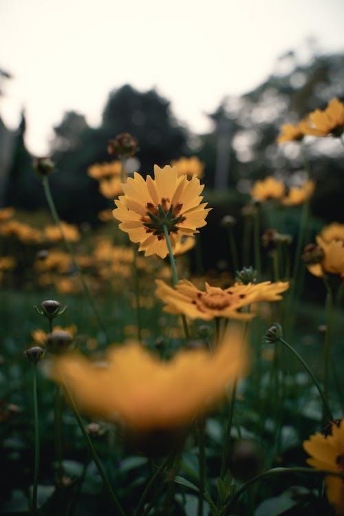 Free stock photo of beautiful, flowers, nature, naturephotography