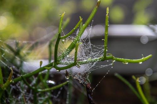 Water Droplets on Green Plant Stem in Tilt Shift Lens