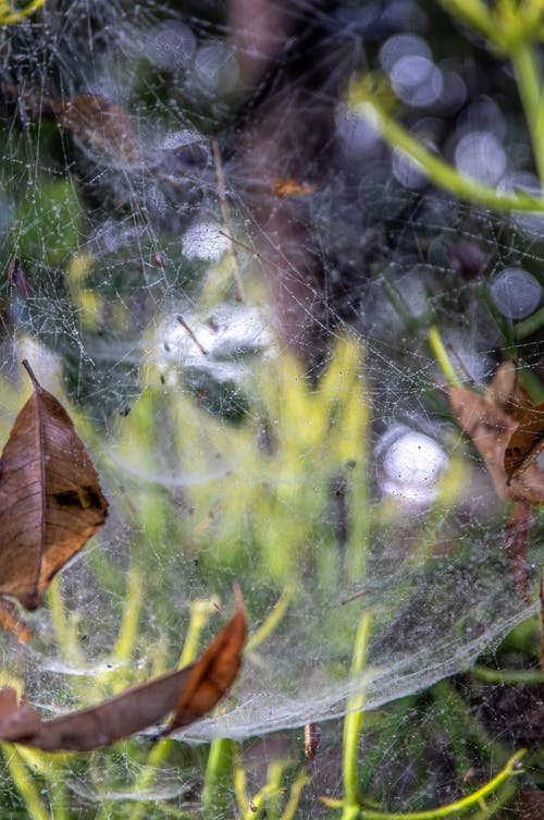 Spider Web on Brown Dried Leaves