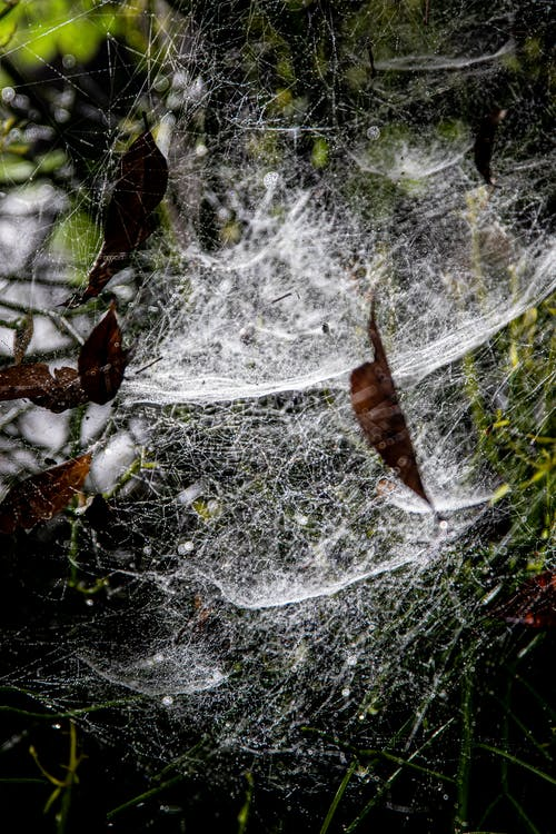 Brown Leaves on Spider Web