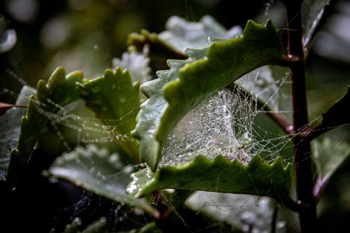 Spider Web on Green Leaf
