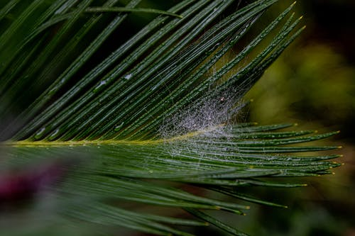 Green Palm Leaf with Spider Web