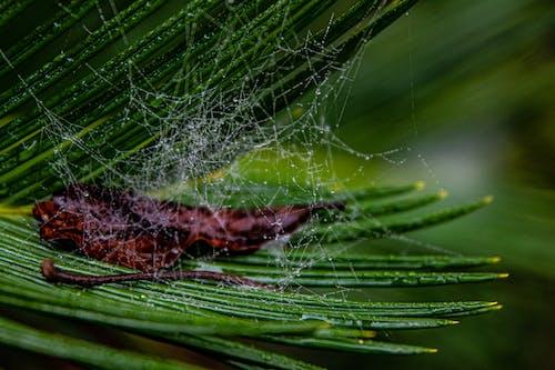 Spider Web on Green Grass