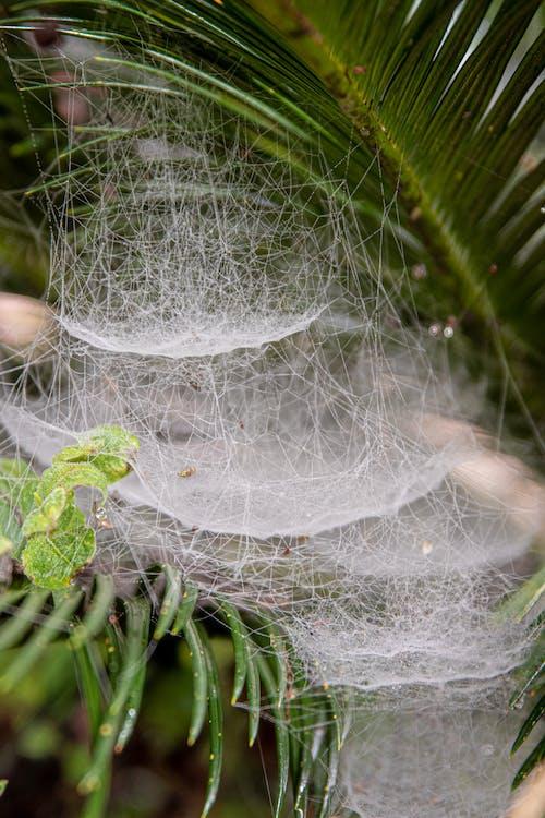 Spider Web on Green Leaf