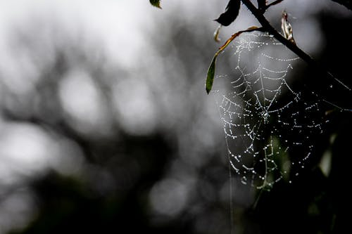 Water Dew on Spider Web