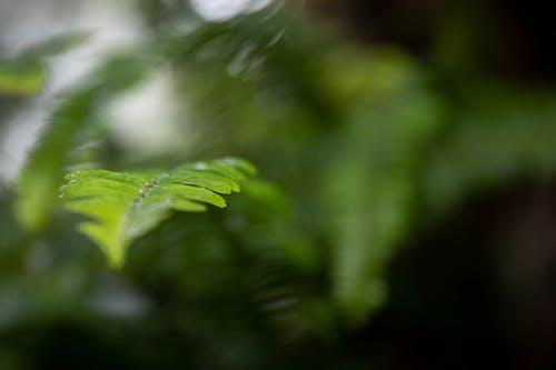 Foto stok gratis berbayang, dasar, daun pakis, Daun-daun