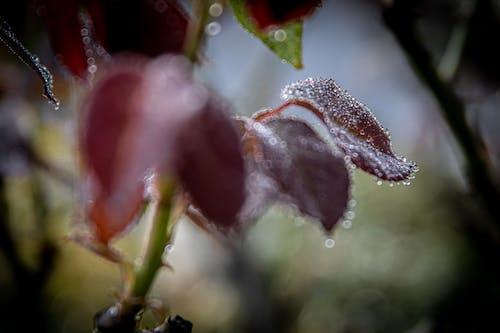 Fotos de stock gratuitas de al aire libre, bokeh, color, crecer