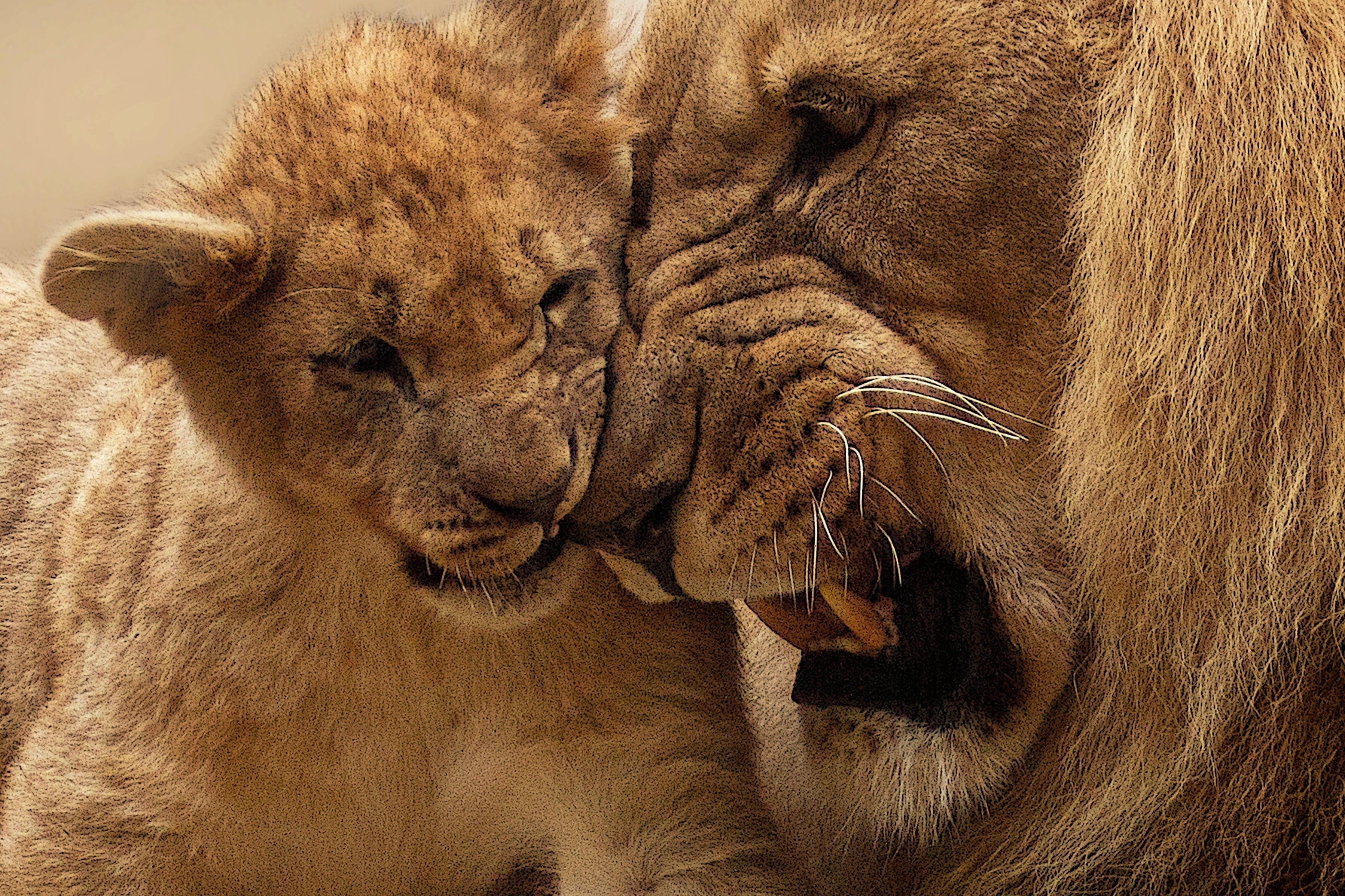귀여운, 남성, 동물, 동물원의 무료 스톡 사진