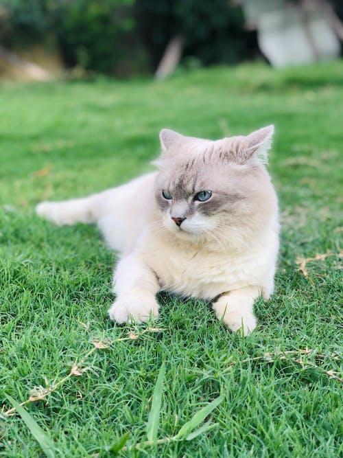 Photos gratuites de adorable, animal, animal de compagnie, chat