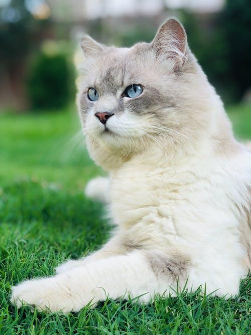 ウィスカー, かわいらしい, キティの無料の写真素材