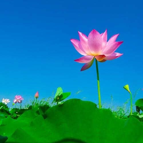 Imagine de stoc gratuită din centrale, cer, floare, floră