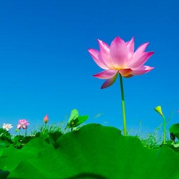Kostenloses Stock Foto zu himmel, blumen, pflanzen, blühen
