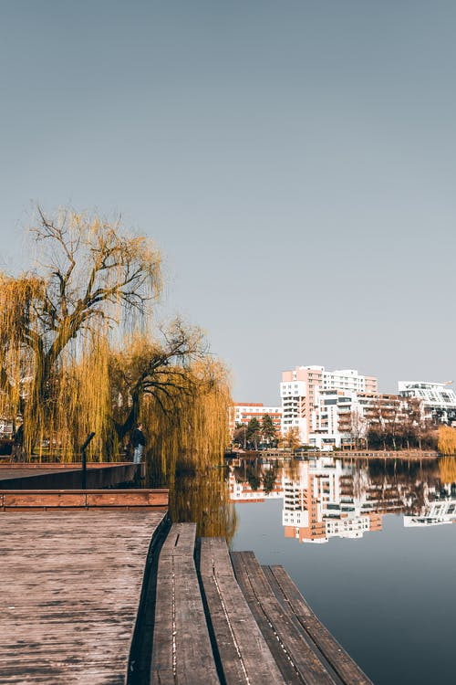 Picturesque willow tree located in city park on lake shore surrounded by modern buildings  reflecting in water during sunny autumn day