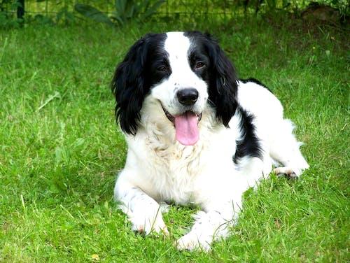 Free stock photo of chien, chien blanc, chien noir
