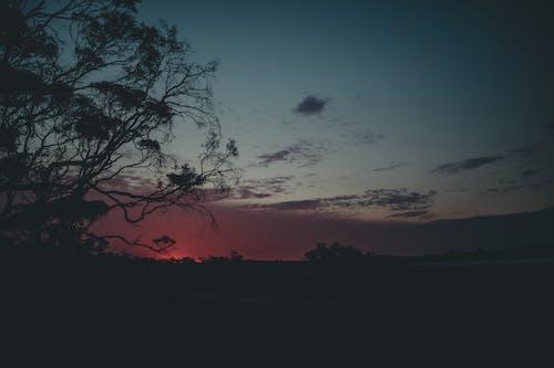 Photos gratuites de arbre, australie, coucher de soleil, coucher du soleil