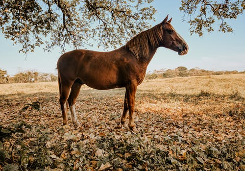 Brown Horse Standing on Brown Dried Leaves