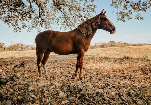 Základová fotografie zdarma na téma denní světlo, farma, fotografování zvířat, hnědý kůň