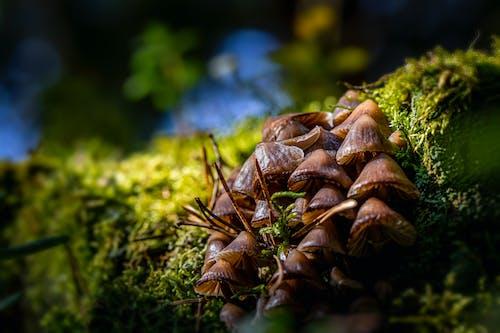 Brown Mushrooms in Tilt Shift Lens
