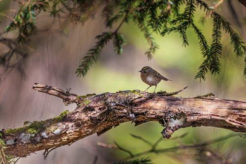 Gratis stockfoto met achtergrond wazig, aviaire, beest, boom