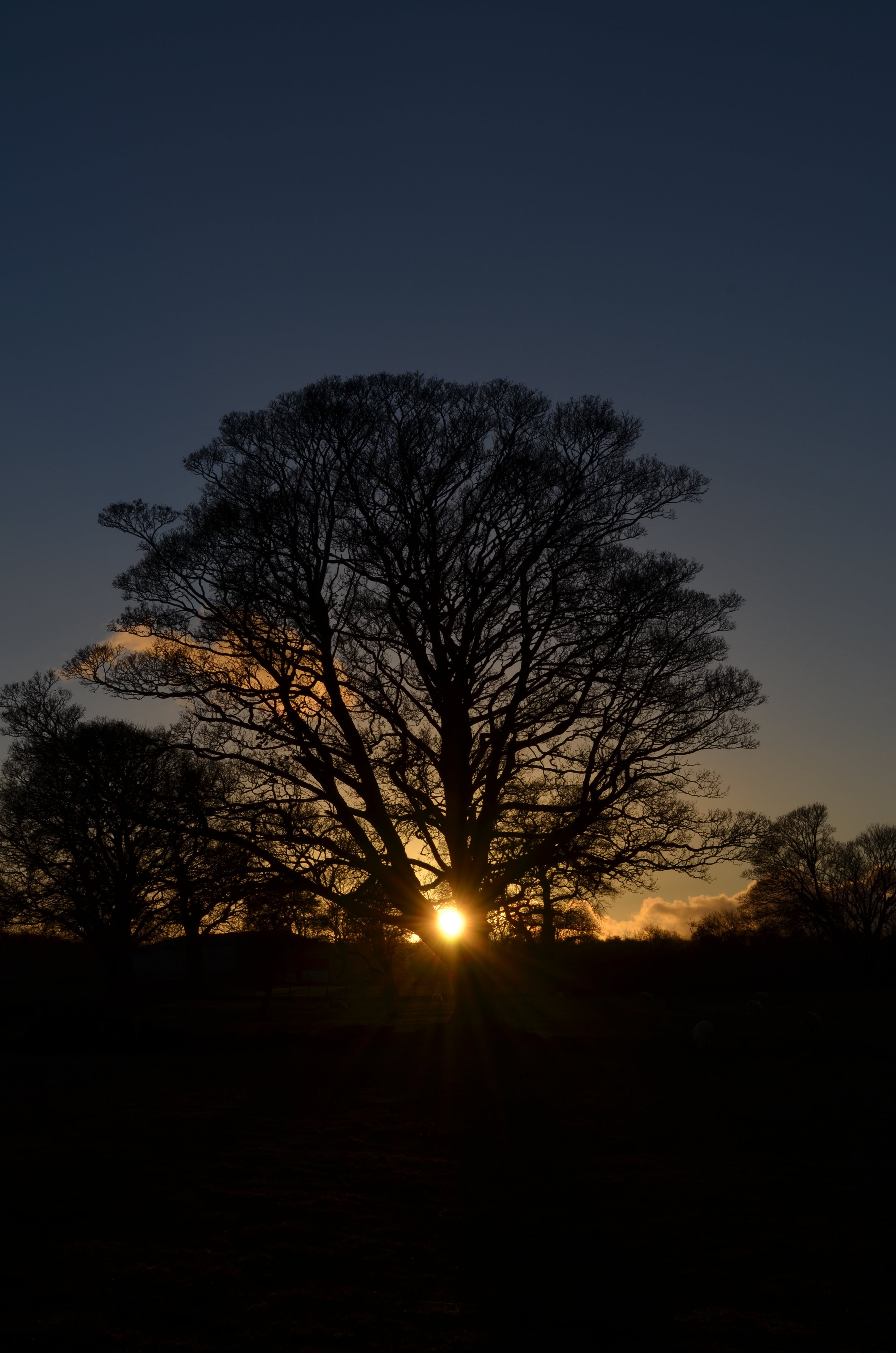 Foto d'estoc gratuïta de alba, arbres, capvespre, fons de pantalla d'iPhone