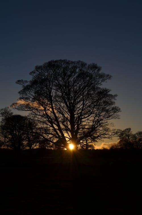 Gratis lagerfoto af gratis baggrund, iPhone-baggrund, morgengry, natur