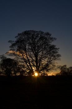 Free stock photo of nature, sunset, sun, trees