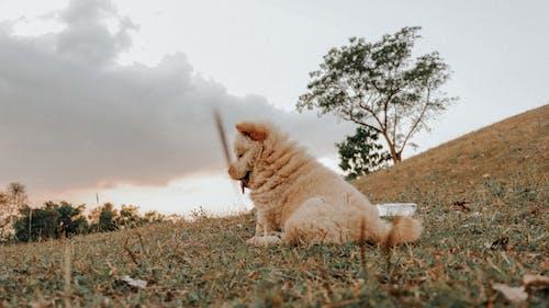 Brown Dog on Brown Grass Field
