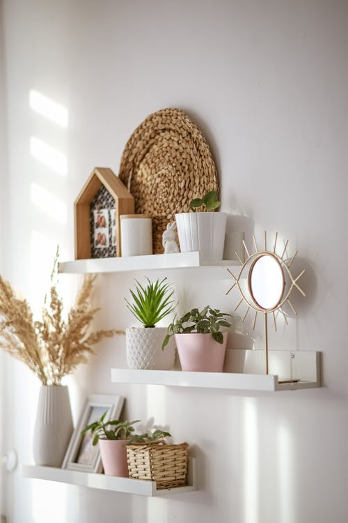 Interior of modern white room with shelves with flowers and plants in pots at soft daylight