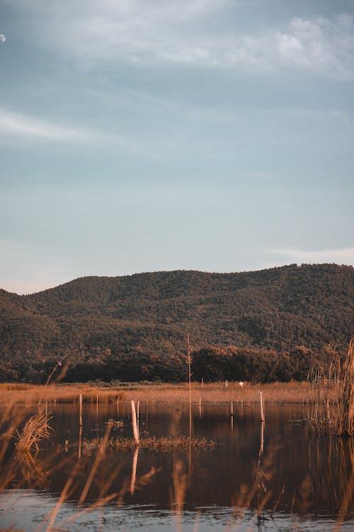 Imagine de stoc gratuită din apă, arbore, armonie