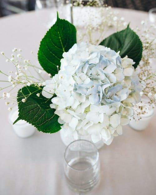 Bouquet of White Bluish Flowers